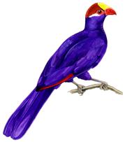 حديقة حيوانات المركز الدولى  - صفحة 2 Violet-Turaco-small-hollow